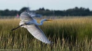 National Estuaries Week