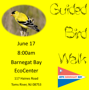 Guided Bird Walk @ Barnegat Bay EcoCenter  | Toms River | New Jersey | United States