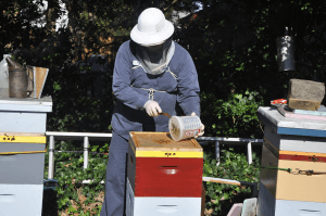 Bee Shore Honey bees and more! @ Barnegat Bay EcoCenter